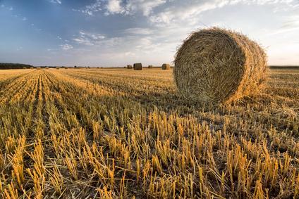 Tereny inwestycyjne, grunty rolne